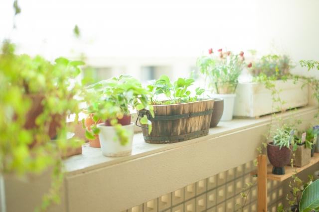 植木鉢とプランターでおしゃれ度は簡単にアップ出来る!