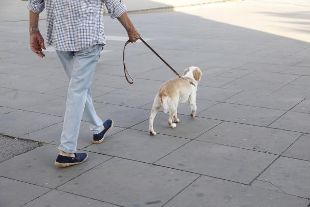 散歩の正しい回数は?室内犬でも散歩が必要?長く一緒に暮らす為に