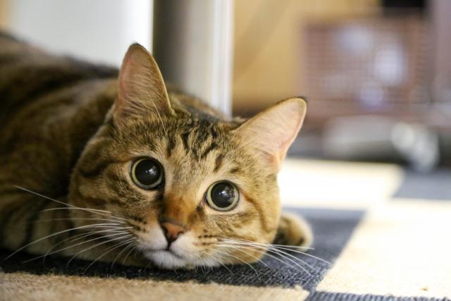 可愛すぎる!?猫のかわいい画像が人の心理に働きかける!?