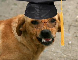 卒業式に電報を送りたい場合!?いつ届くようにすればいいの?