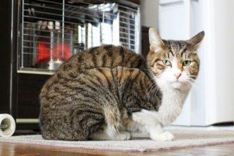 石油ストーブの前に猫がいる