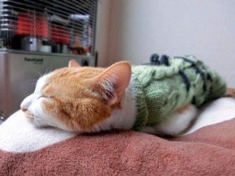 猫が寝ている画像