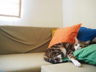 風水的にも良くなかった!?毎日ソファベッドで寝るってアリ?