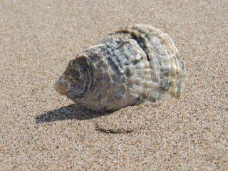 どうすればいいの!?拾ってきた貝殻が臭い時の対処法!?