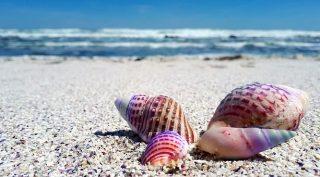 貝殻を白くする方法が知りたい!!どうすれば綺麗になるの!?