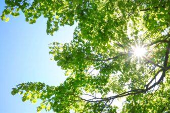 木々の間に日差しが降り注いでいる画像