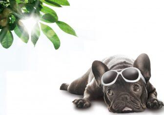 サングラスをした黒色の犬が強い日差しに参った表情をしている画像